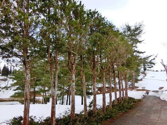 3.25雪⑤